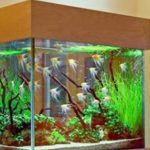Can we build aquariums with adhesives?